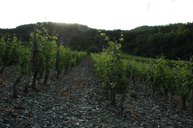 Moseldalen – vinodlingar 1 lågupplöst